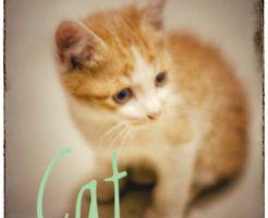 猫カフェの値段相場って?おすすめ時間帯の猫が元気な時間はいつ?1