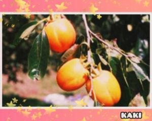 柿の食べごろの見分け方!どれくらい持つ?冷凍するとおいしい?栄養も2